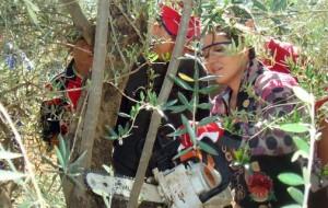 Curso-poda.-Tierra-Verde.-2011.1-506x320