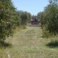 Información Asociación Ecológica Tierra Verde