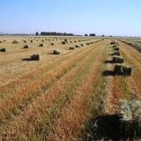 Se venden pacas y grano ecológico