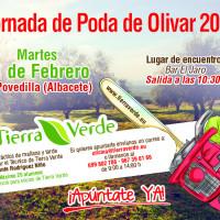 Jornada de poda de Olivar – Febrero 2020