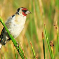 Turismo ornitológico: desarrollo local y conservación