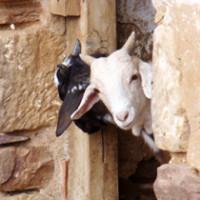 Paisaje turístico y ganadería ecológica