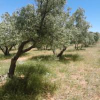 La Asociación Tierra Verde, pionera en la recuperación de las cubiertas vegetales